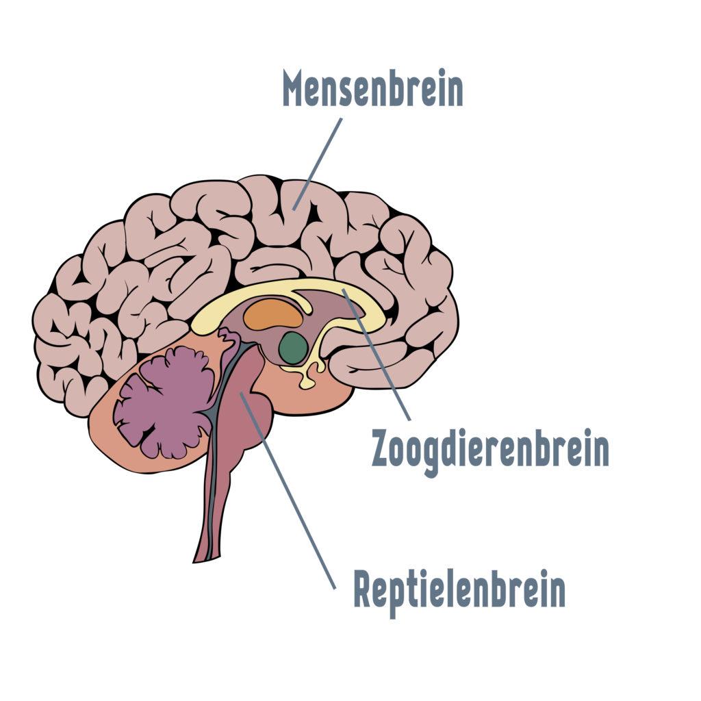 3-Breinen-Alsheechtennietvanzelfgaat