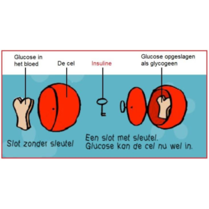 Sleutel slot principe hormoon
